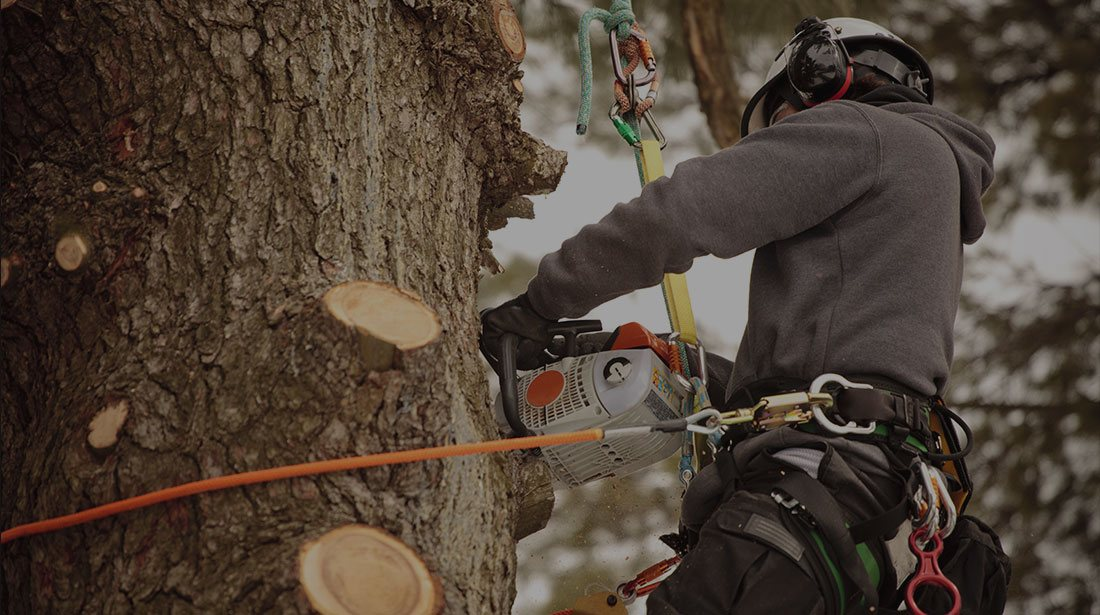 Sam and Co. Trees and Landscaping: Stump and tree removal in Plainview, Idalou   and Levelland
