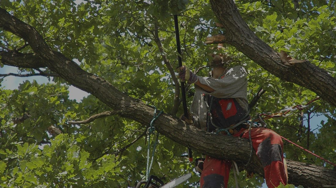Sam and Co. Trees and Landscaping: Tree cabling and bracing in Plainview, Idalou   and Levelland