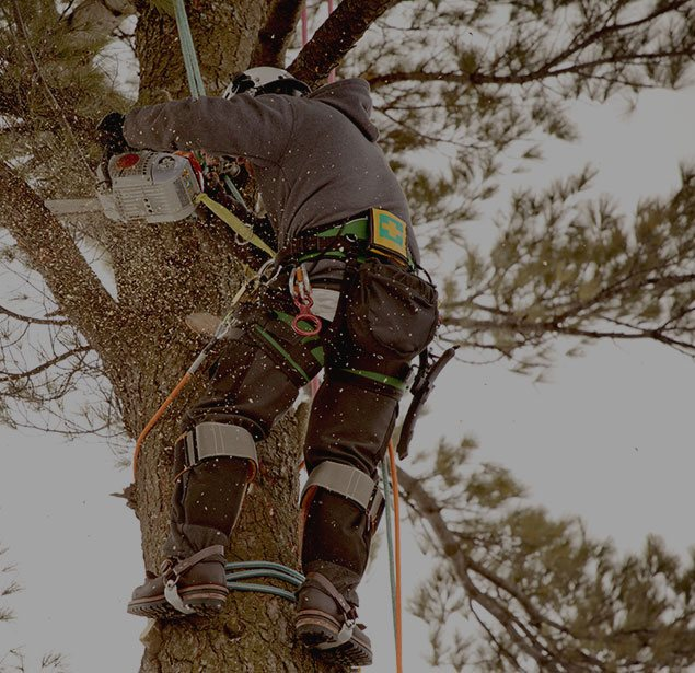 Sam and Co. Trees and Landscaping: Tree health in Plainview, Idalou   and Levelland