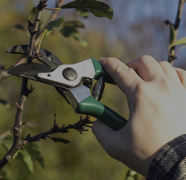 Sam and Co. Trees and Landscaping: Tree pruning in Plainview, Idalou   and Levelland