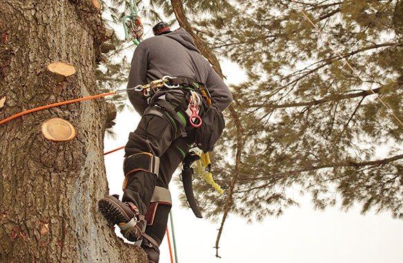 man cutting tree